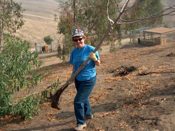 Volunteer Dona